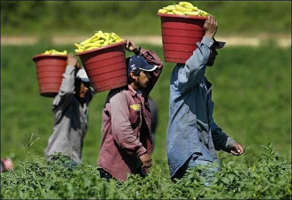 illegal-immigrants-working